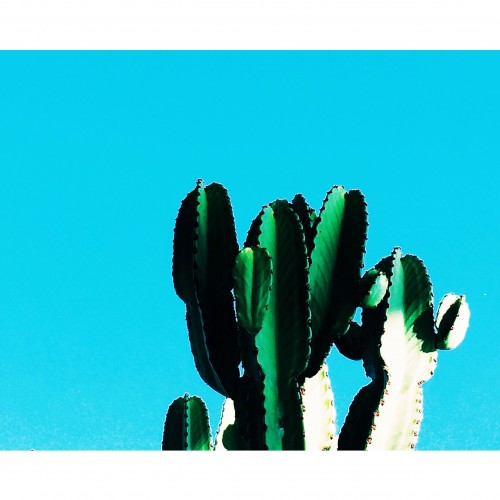 coffeetography-the-getty-cactus